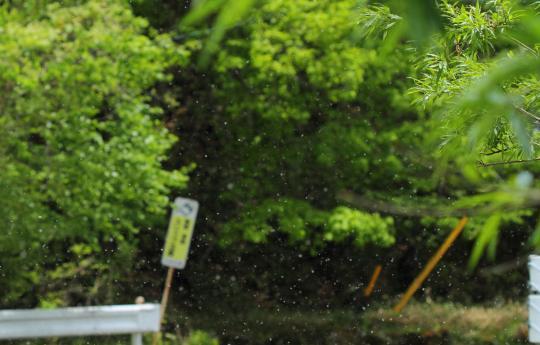 2012.06.11-綿毛-3