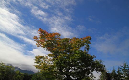 2012.06.22-紅葉 17