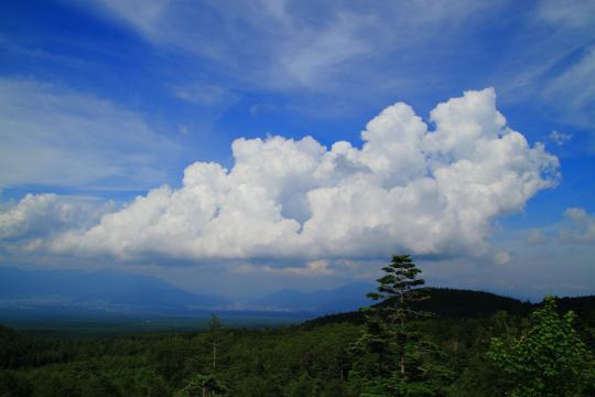 2012.07.18-樹海-23