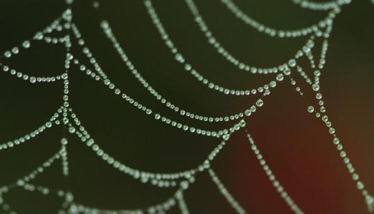 2012.07.22-蜘蛛-3