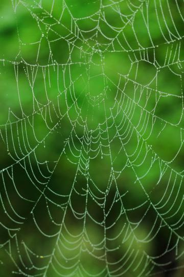 2012.07.23-蜘蛛-4