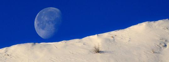 森の冬2010.01.16-0001-(55)