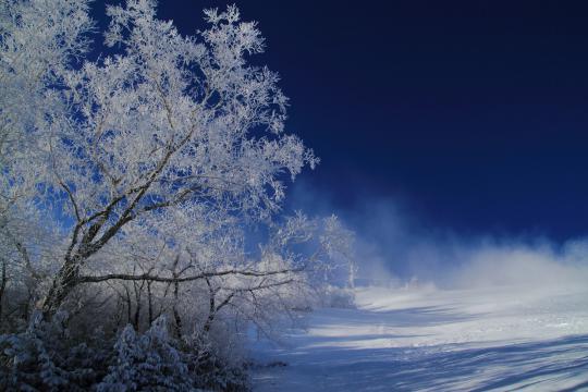 2012.12.19-霧氷-1