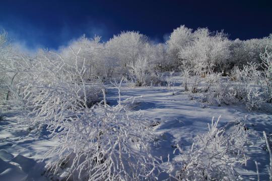 2012.12.19-霧氷-3