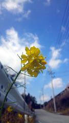 fotochan_5_166563066551288ee5942db_cor.jpg