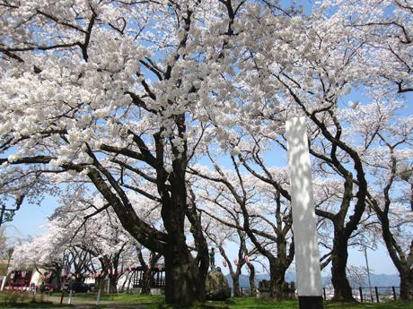 0501-3-桂城公園 桜 1