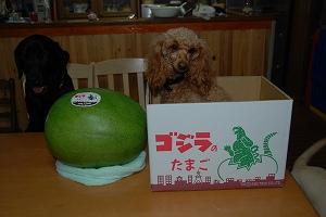 fc2-鋼夜&依鈴