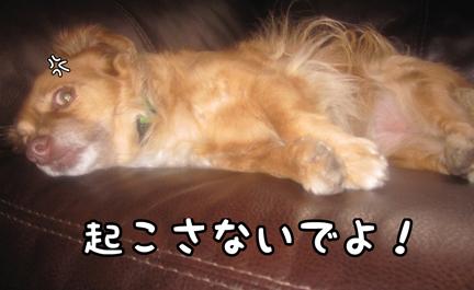 fox_08042012-01.jpg