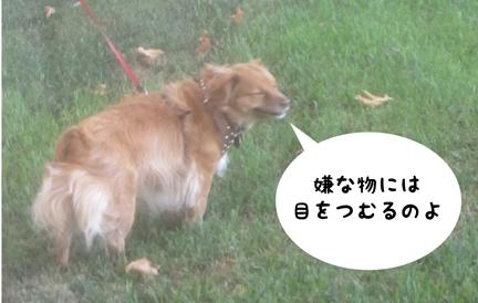 fox_08122012-01.jpg