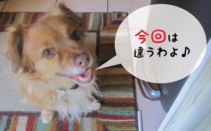 fox_08302012-01.jpg