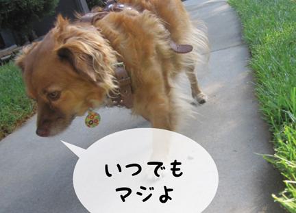 fox_10082012-01.jpg