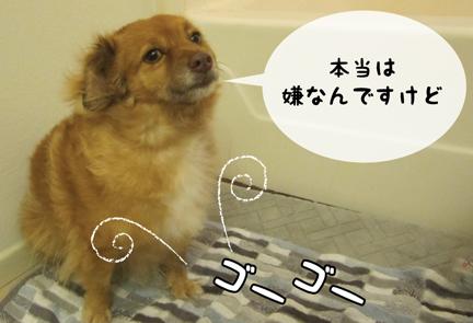 fox_10172012-01.jpg