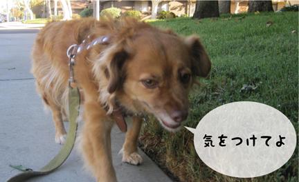 fox_10192012-01.jpg
