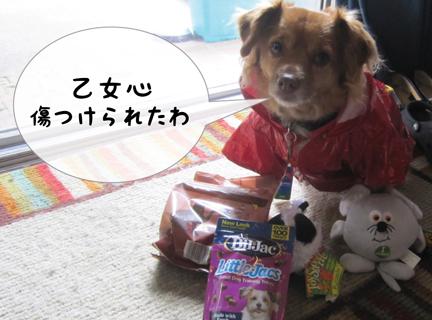 fox_10202012-01.jpg
