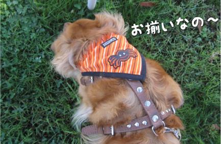 fox_10242012-01.jpg
