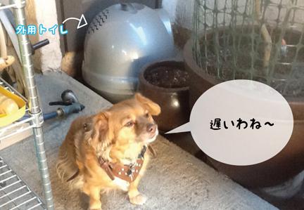 fox_11122O12-01.jpg