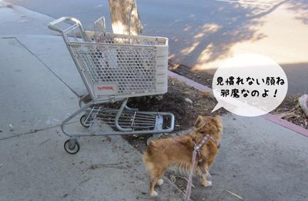 fox_11212012-01.jpg