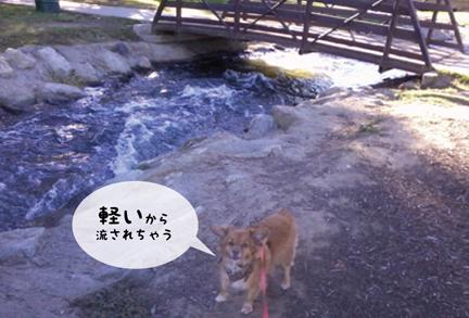foxbridge_10302012-01.jpg