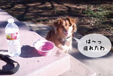 foxdrink_10302012-01.jpg