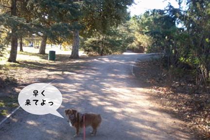 foxpath_10302012-01.jpg