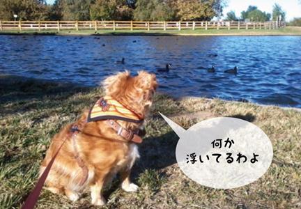foxwater_10302012-01.jpg