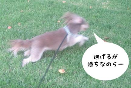 zig_08122012-01.jpg