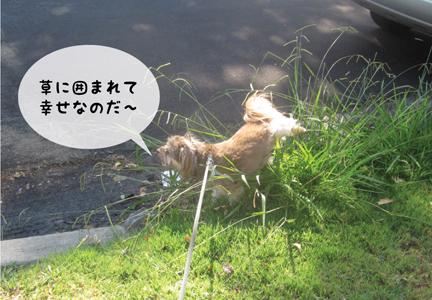 zig_09162012-01.jpg