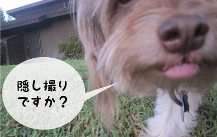 zig_09252012-01.jpg