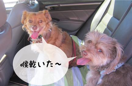 zigfox_09142012-01.jpg