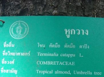 トロピカル名札