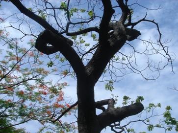 サンド 木1