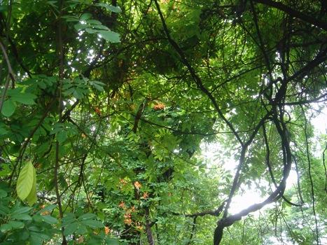 葉影から1