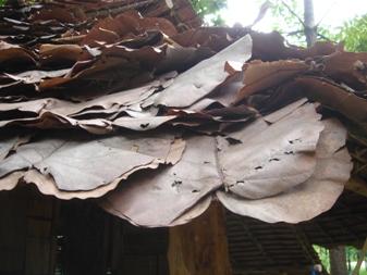 大きな葉 トゥントゥン