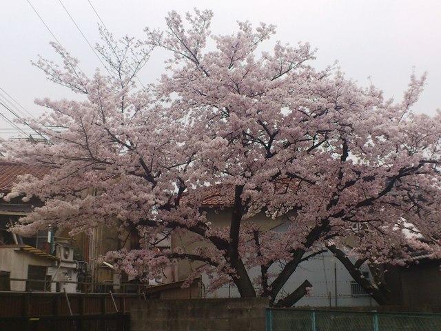 2012-04-12-DSC_0056.jpg