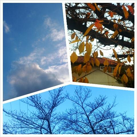2012-12-04-PhotoGrid_1354581511263.jpg