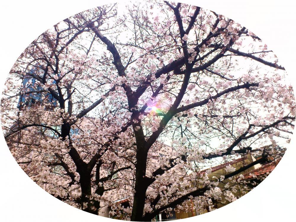 2013-03-27-asa.jpg