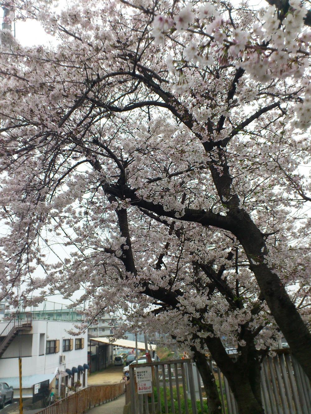 2013-03-28-asa1.jpg