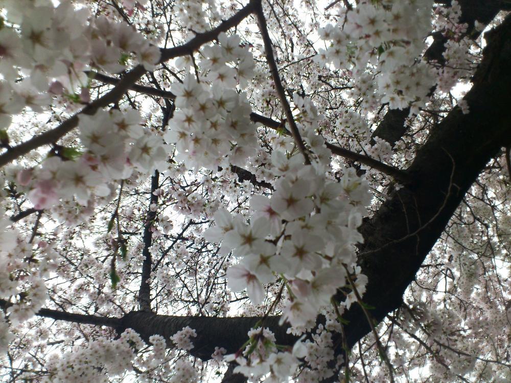 2013-03-28-asa2.jpg