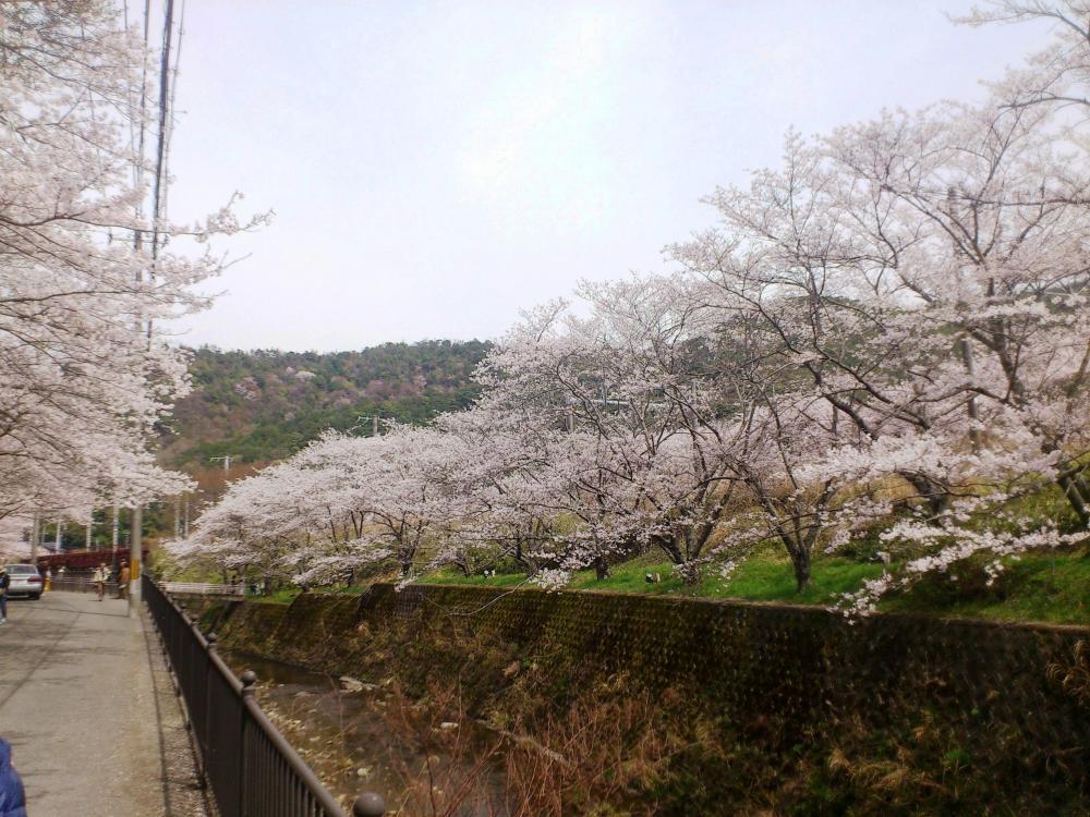2013-04-02-HIRU7.jpg