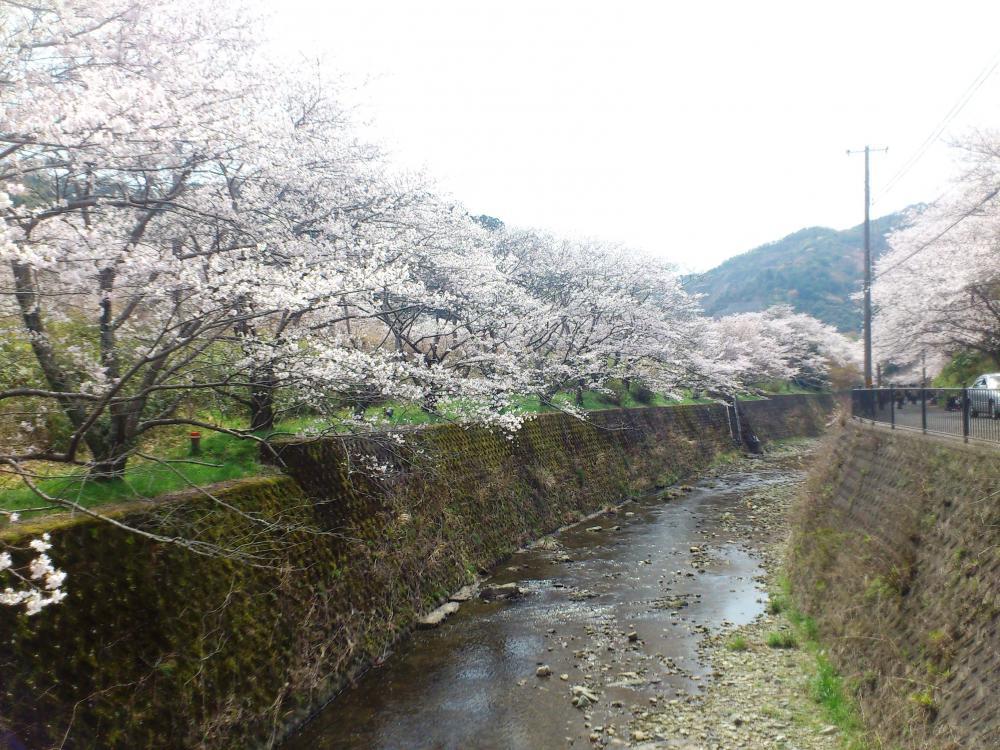2013-04-02-HIRU8.jpg
