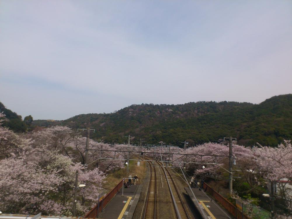 2013-04-02-HIRU9.jpg