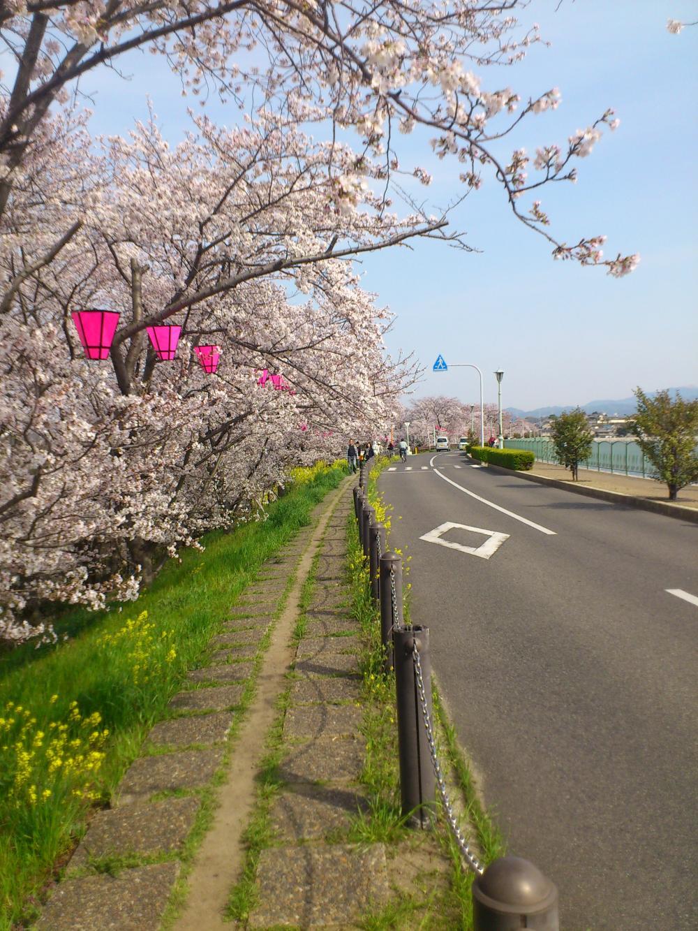 2013-04-02-sakura2.jpg