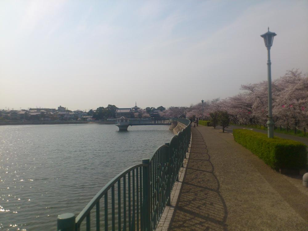 2013-04-02-sakura4.jpg