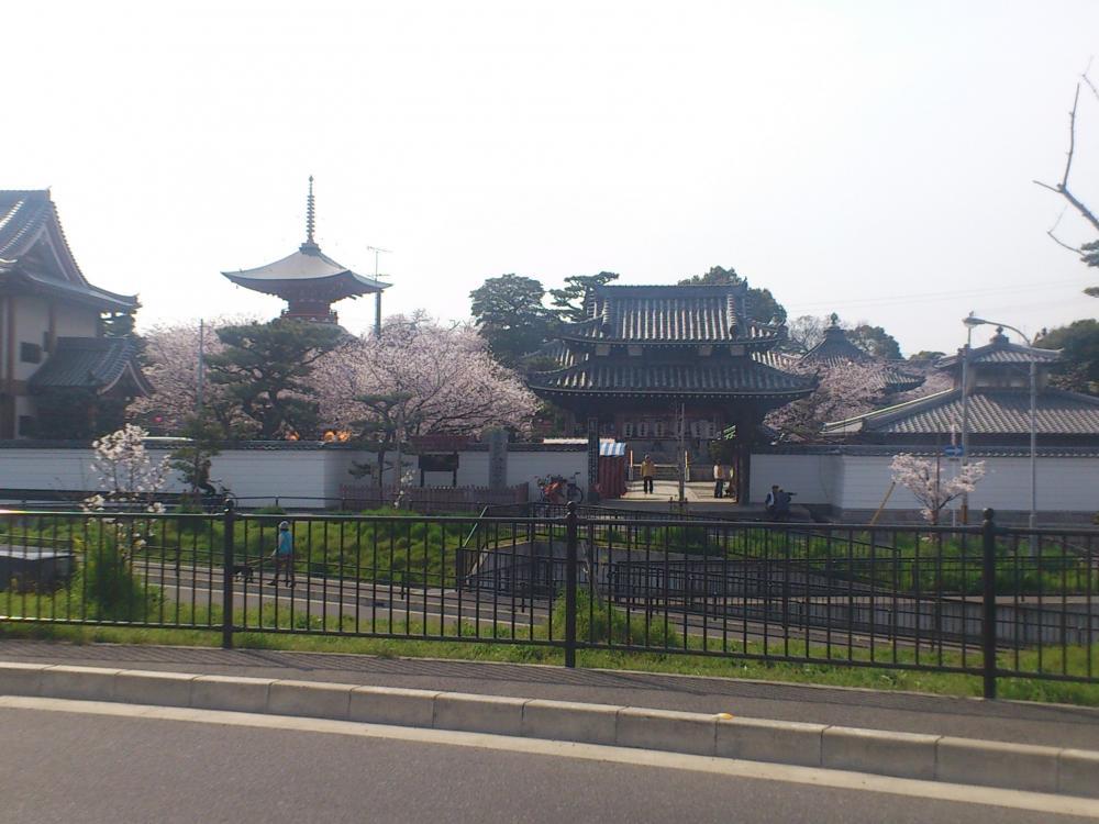 2013-04-02-sakura5.jpg