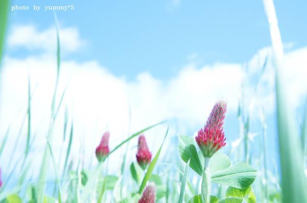 アグリ 空と花ブログ