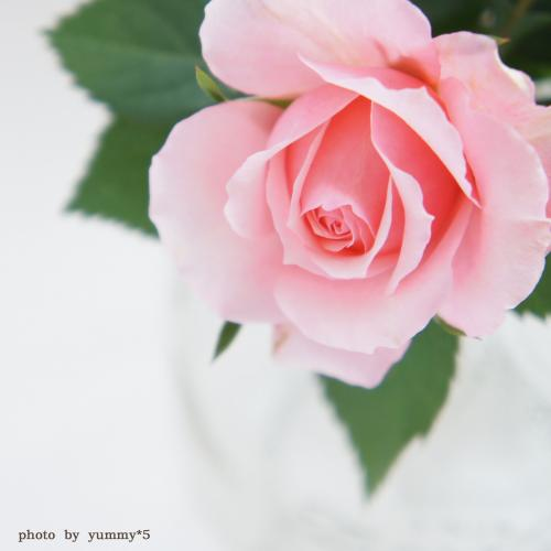 バラ テーブル ブログ
