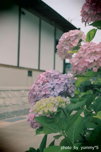 あじさい寺 寺とBブログ
