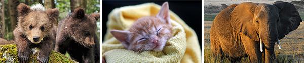 header_EOY_us12子猫の写真