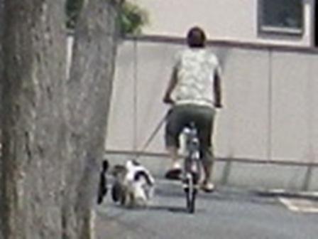 2012.4.25 3頭自転車引き