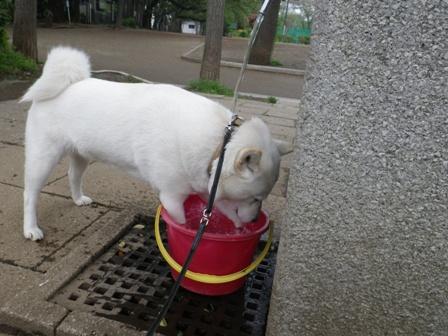 2012.4.26 水遊び・花